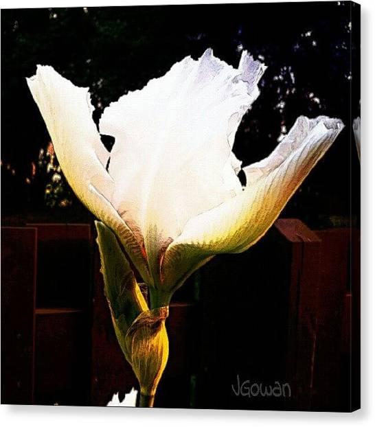 Largemouth Bass Canvas Print - Iris In Bloom. #iris #inbloom #bloom by Jess Gowan