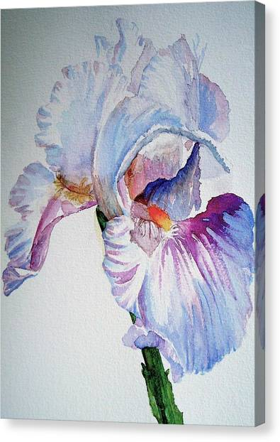 Iris In The Garden Canvas Print