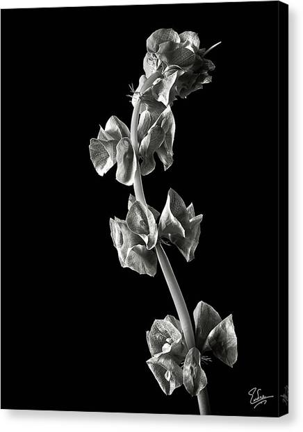 Irish Bells In Black And White Canvas Print