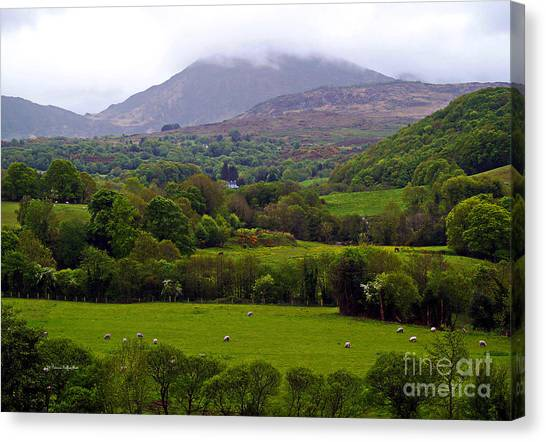 Irish Countryside II Canvas Print