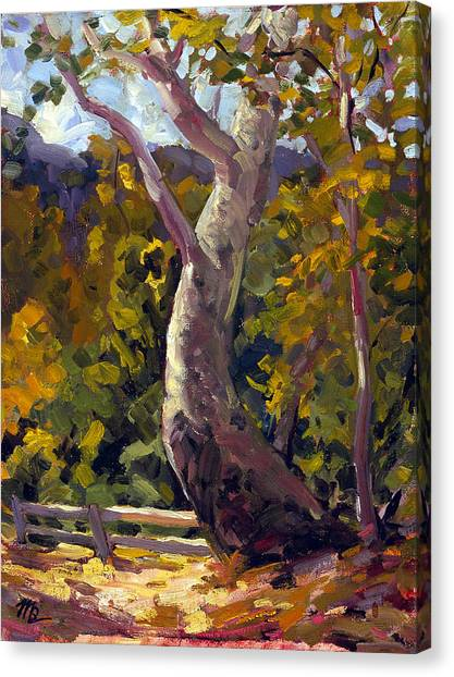 Irvine Oak Canvas Print
