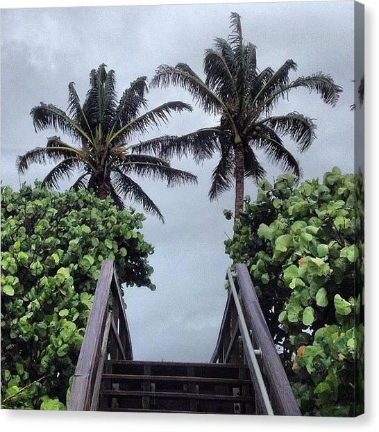 Hurricanes Canvas Print - #isaac #sunsentinel #juno #palmtree by Kyle Kazoo
