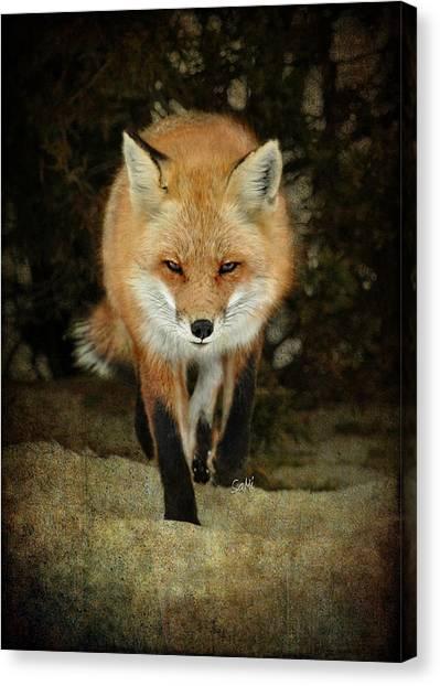 Island Beach Fox Canvas Print