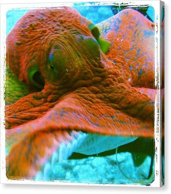 Scuba Diving Canvas Print - Island Octopus by Jody Robinson