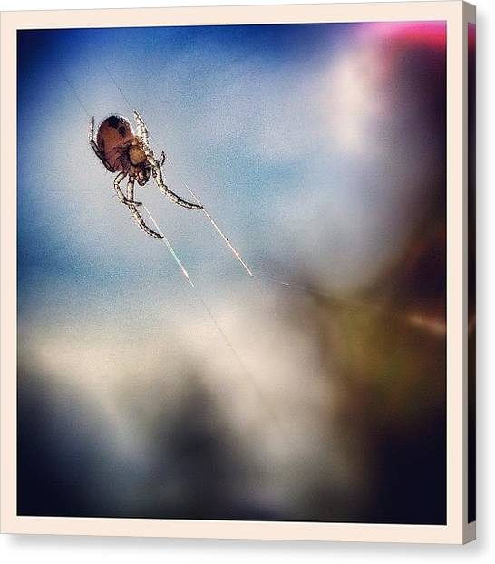 Spider Web Canvas Print - It Had To Be Done Today.... The Amazing by Robert Campbell
