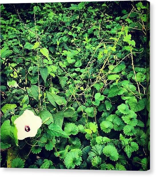 Kentucky Canvas Print - It's… A #flower. | #green #nature by Hunter Graham