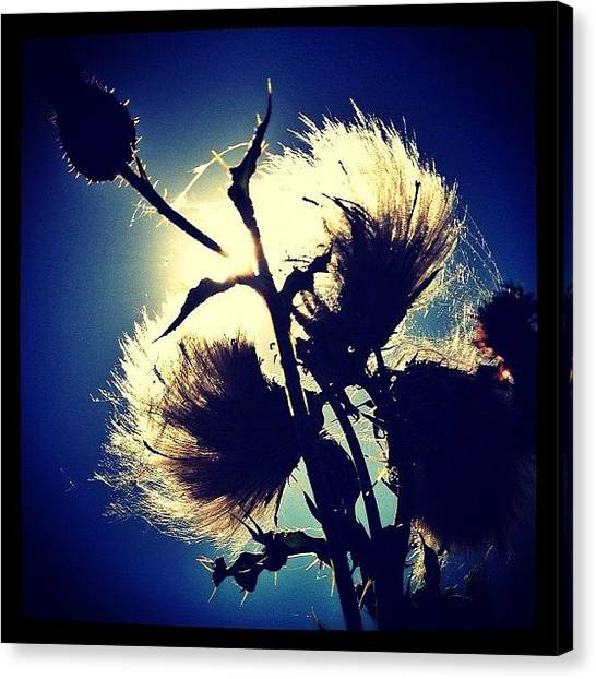 Floss Canvas Print - It's Been An Autumnal Day... #fluff by Robert Campbell