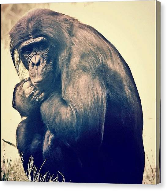Primates Canvas Print - It's Like We Never Really #evolved by Daniel Huff