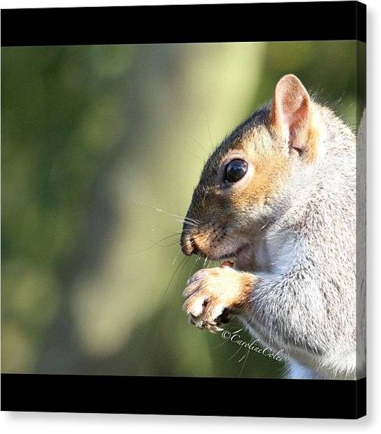 Squirrels Canvas Print - It's Mine, All Mine!! #squirrel by Caroline Coles