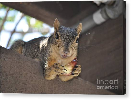 It's My Fig Canvas Print
