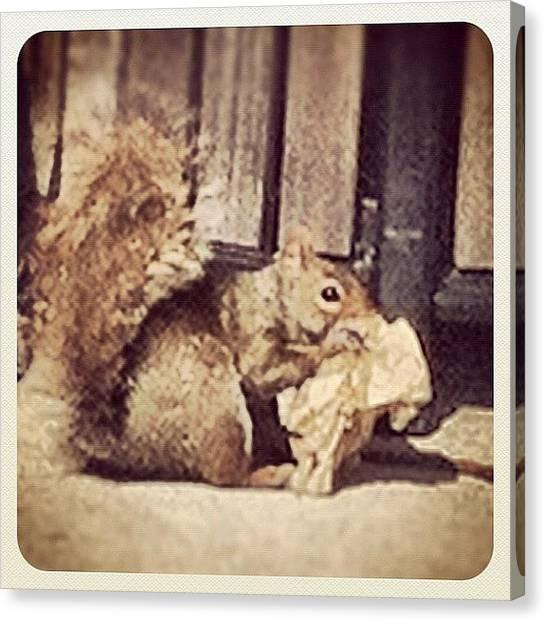 Squirrels Canvas Print - It's Ok Vern Get Ahold Of by Javelyn Evans
