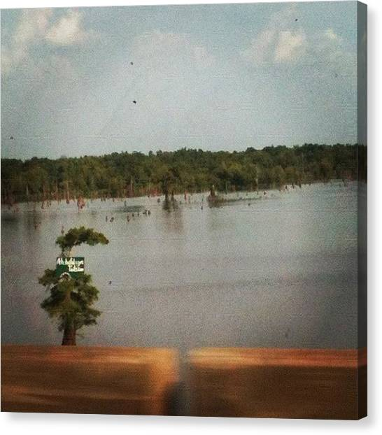 Swamps Canvas Print - It's The Atchafalaya! This Swamp Is by Melissa Napolitano