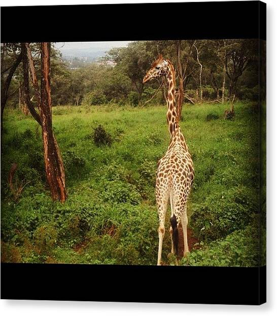 Kenyan Canvas Print - I've Been Missing #kenya So Much by Joanna Dowdell