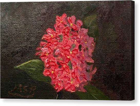 Ixora Bloom Canvas Print by Maria Soto Robbins