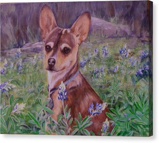 Jacob  In Bluebonnets Canvas Print