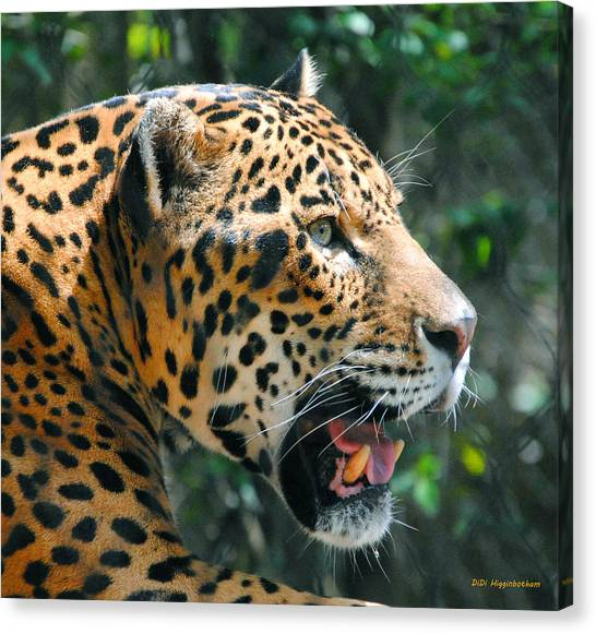 Jaguar In May Canvas Print by DiDi Higginbotham
