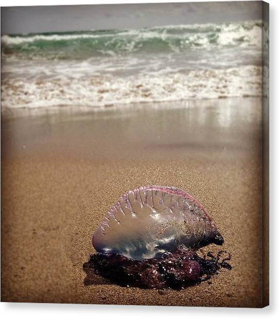 Balloons Canvas Print - Jellllllaaayy #jelly #jellyfish #purple by Emily W
