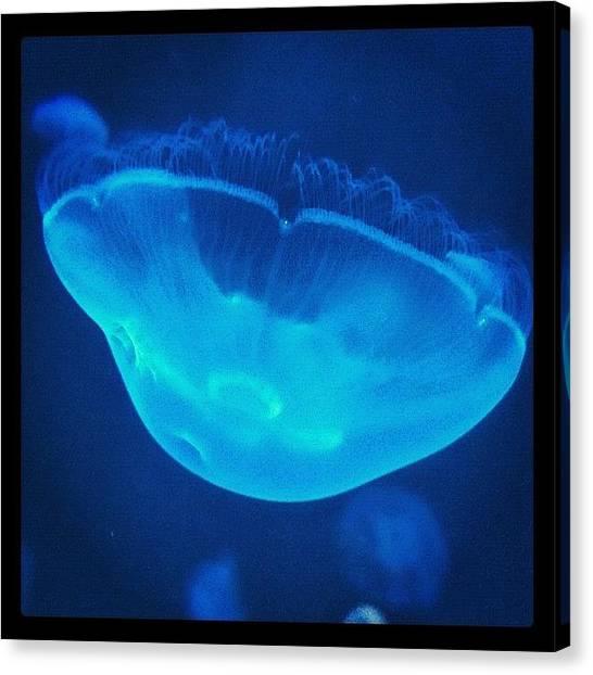 Aquariums Canvas Print - Jelly Beauty by Spyros Papaspyropoulos