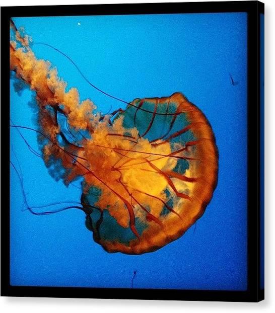 Wine Canvas Print - Jellyfish by Eric Kent Wine Cellars
