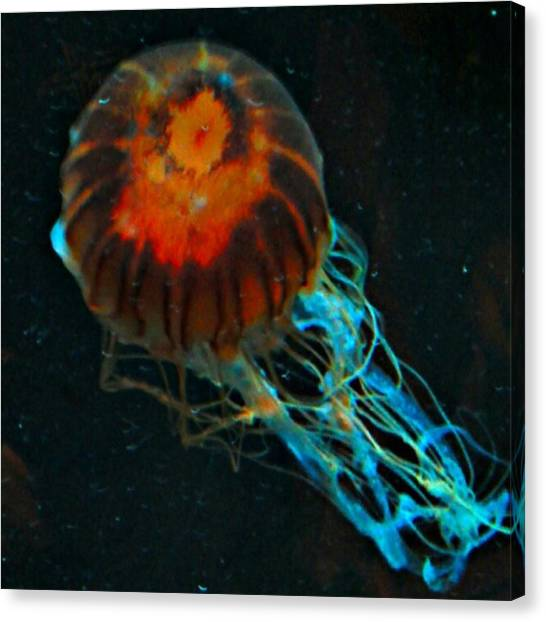 Aquariums Canvas Print - #jellyfish #instadroid #andrography by Kel Hill