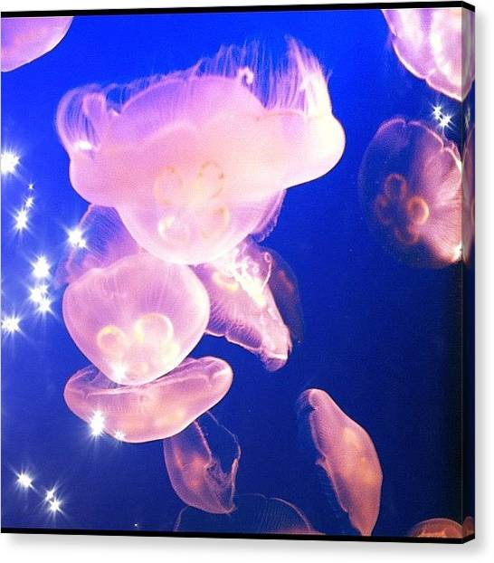 Marines Canvas Print - #jellyfish #vancouver #instagram by Victor Wong