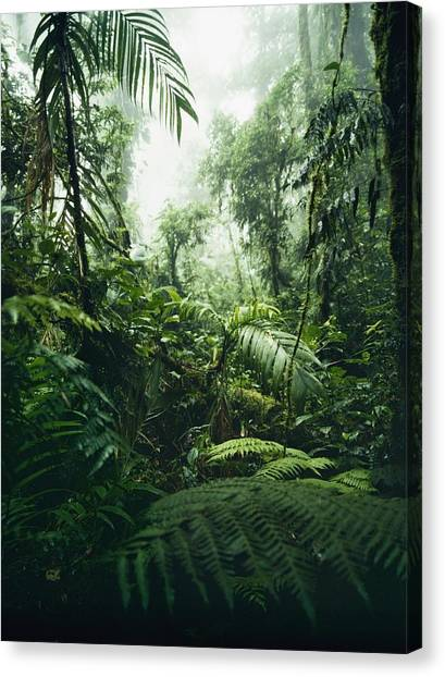 Monteverde Canvas Print - Jungle In Monteverde Cloud Forest by Axiom Photographic