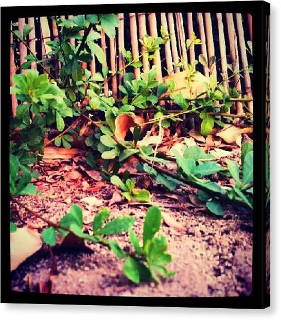 Jungles Canvas Print - Jungle In The Backyard by Dorit Stern