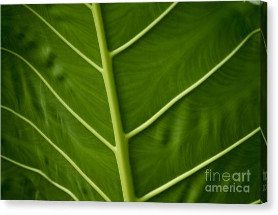 Jungle Leaf Canvas Print