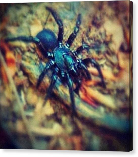 Spiders Canvas Print - Just A Little Trapdoor Spider by Aaron Justice
