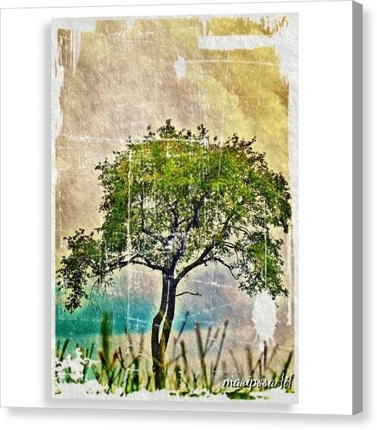 Tennessee Canvas Print - Just A Tree by Mari Posa
