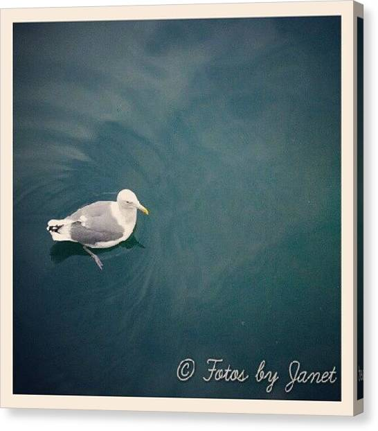 Flycatchers Canvas Print - Just Floating #bird #birds #water by Janet Ortiz