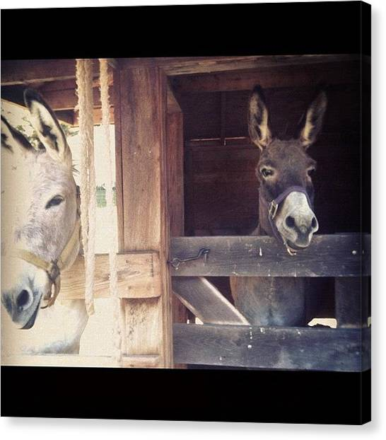 Donkeys Canvas Print - Just #hanging With #some #asses by Melissa Doyle