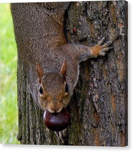 Squirrels Canvas Print - Just In Case You Missed It, There's A by Tanya Sperling