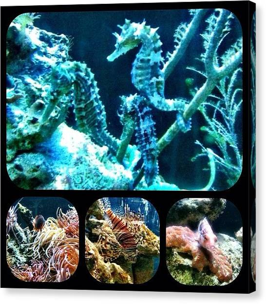 Seahorses Canvas Print - Just Keep Swimming by Casey Fessler