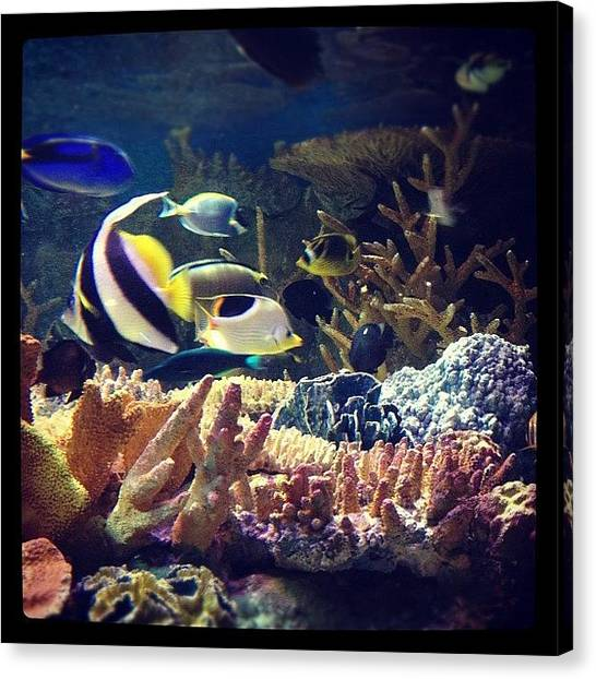 Aquariums Canvas Print - Just Keep Swimming. by Jill Jankowski