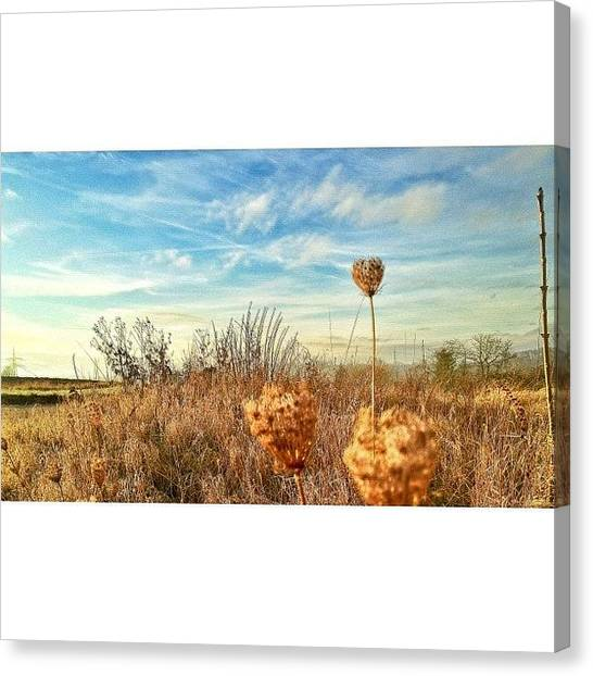 Storks Canvas Print - Just Nature And A Iphoneograph ☺ by Melanie Stork
