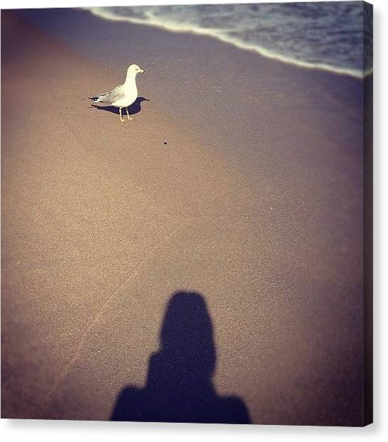 Seagulls Canvas Print - Just Saying Hey, You Know. 🐦☀🌴 by Emily W