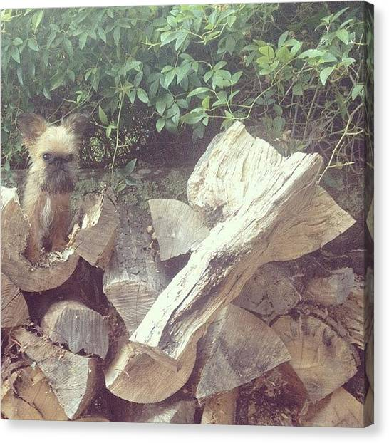 Farmers Canvas Print - Just Seamlessly Blending Into This Wood by Caitlin Schmitt