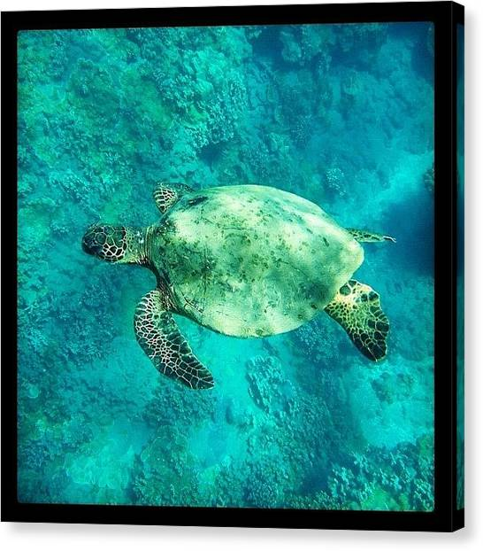 Turtles Canvas Print - Just Went On An Amazing Snorkeling by Kim Hudson
