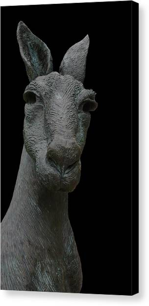 Kangaroo Smith Close On Black Canvas Print by Gregory Smith