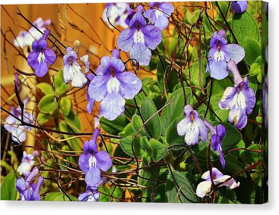 Kathy's Violets From Australia Canvas Print
