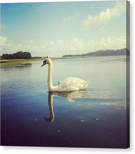 Marshes Canvas Print - Kayaking On A Sunday Morning #swan by Jonny Luter