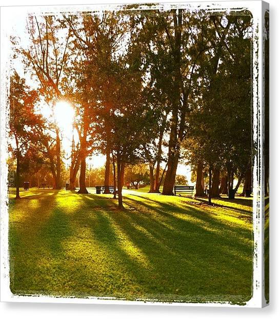 Grove Canvas Print - #kenndy #park #morning #run #coconut by Antoinette Zavala