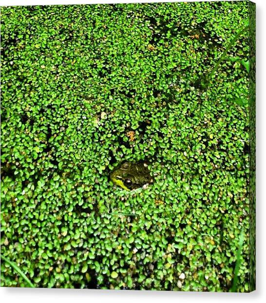 Frogs Canvas Print - Kermit's Swamp Years?? #frog by Mr. B