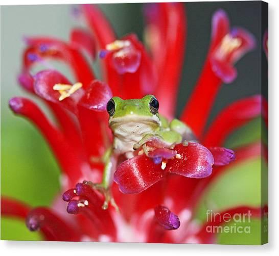 Kiss A Prince Frog Canvas Print