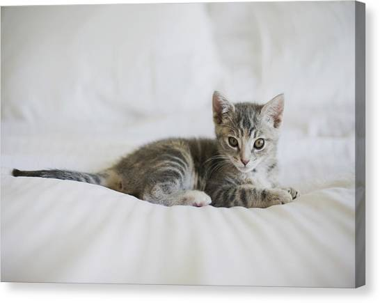 Cat Canvas Print - Kitten by Cindy Loughridge