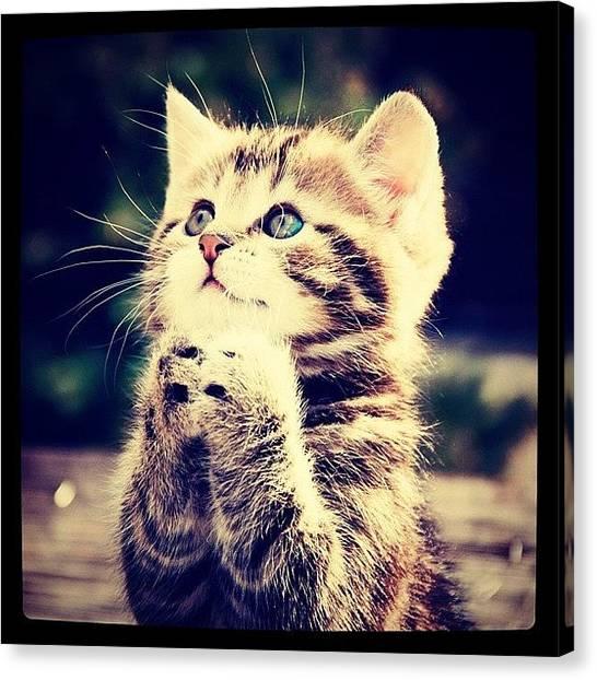 Milk Canvas Print - #kitten #katetsai #kittenoftheday by Daniel Leontiev