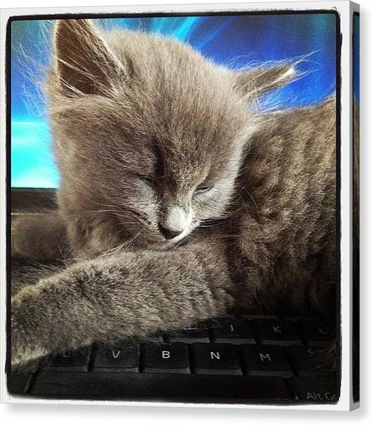 Keyboards Canvas Print - Kitten On My Keyboard by Kevin Green