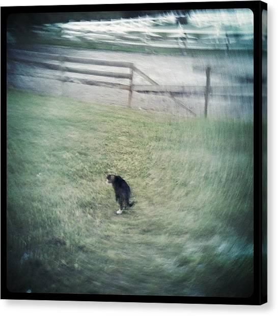 Barns Canvas Print - #kitty #barn #cat #green #grass #fence by Emily W
