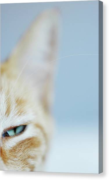 Cat Canvas Print - Kitty by Cindy Loughridge